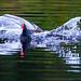 Splash landing by Steve-h