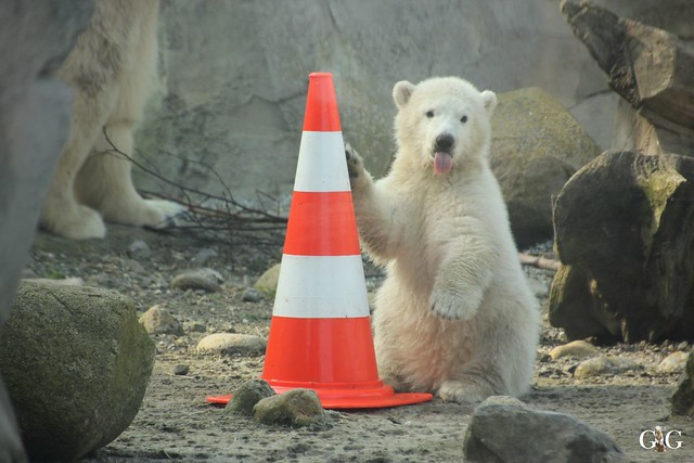 Zoo Bremerhaven 10.04.16 2.Teil80