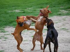 funny dogs having fun