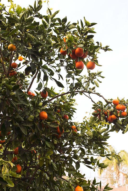 Honey Sweetened Orange Marmalade