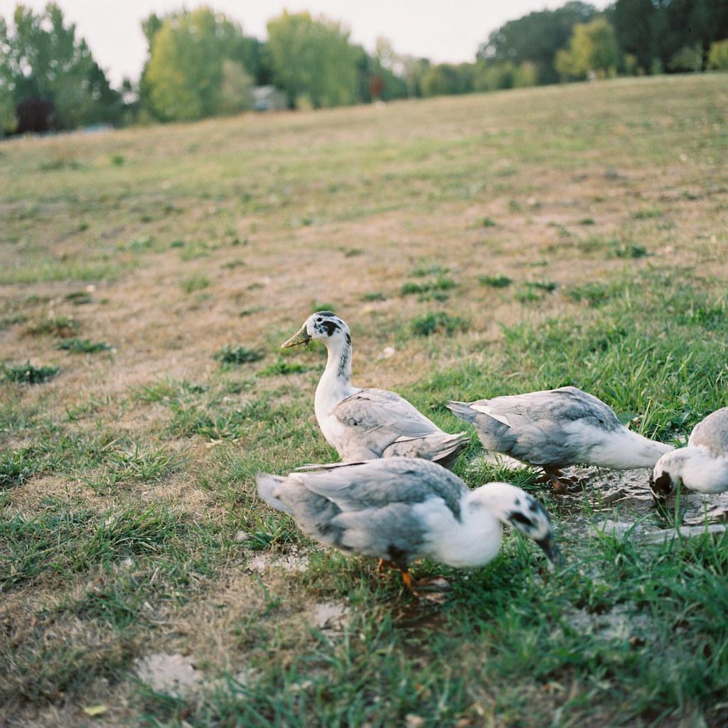 sunny ducks.