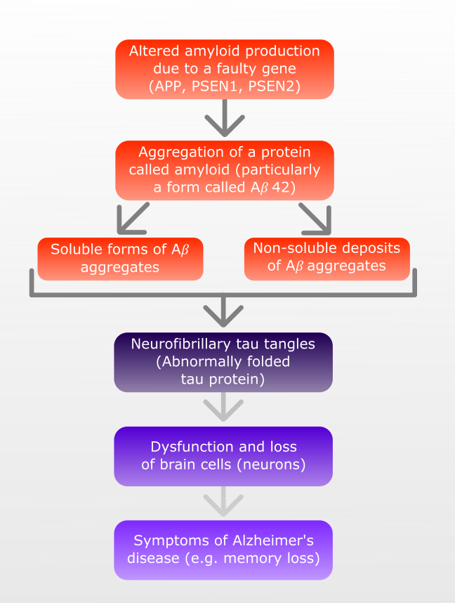 diagram showing amyloid cascade hypothesis