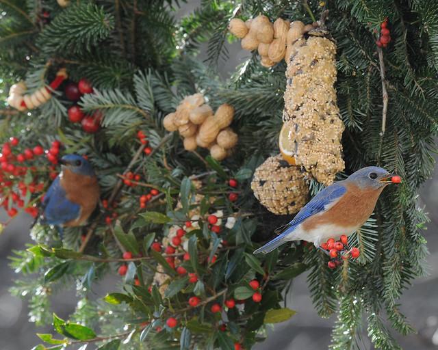Edible Bird Wreath