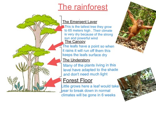 Rainforest EE - Y5