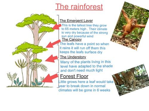 Rainforest EE - Y5