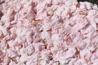 花びら満開