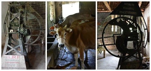 Dairy producers and processors in Bhadrack, Odisha State, India