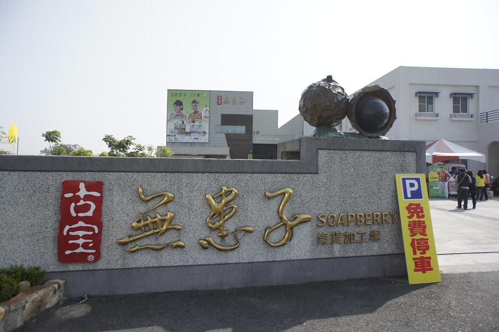 台南市安定區古寶無患子 (2)