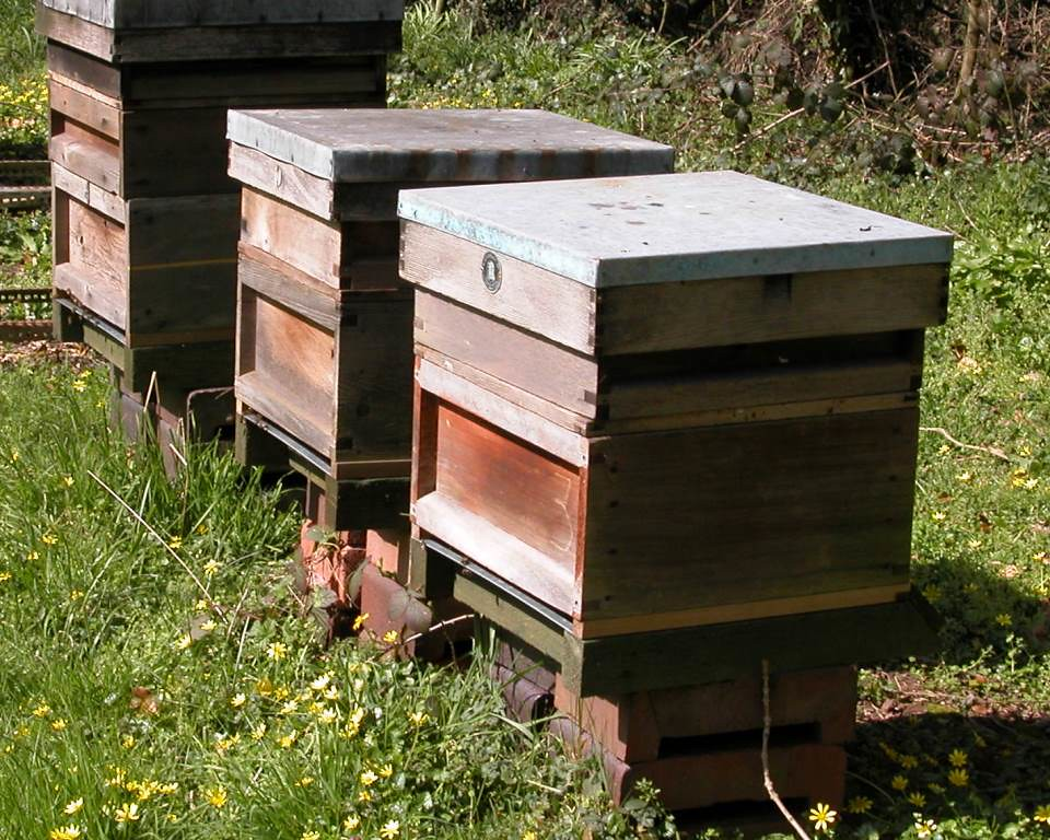 2 April 2007 - (Photo credit: Bees for Development).