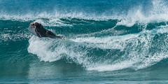 Surf_8506