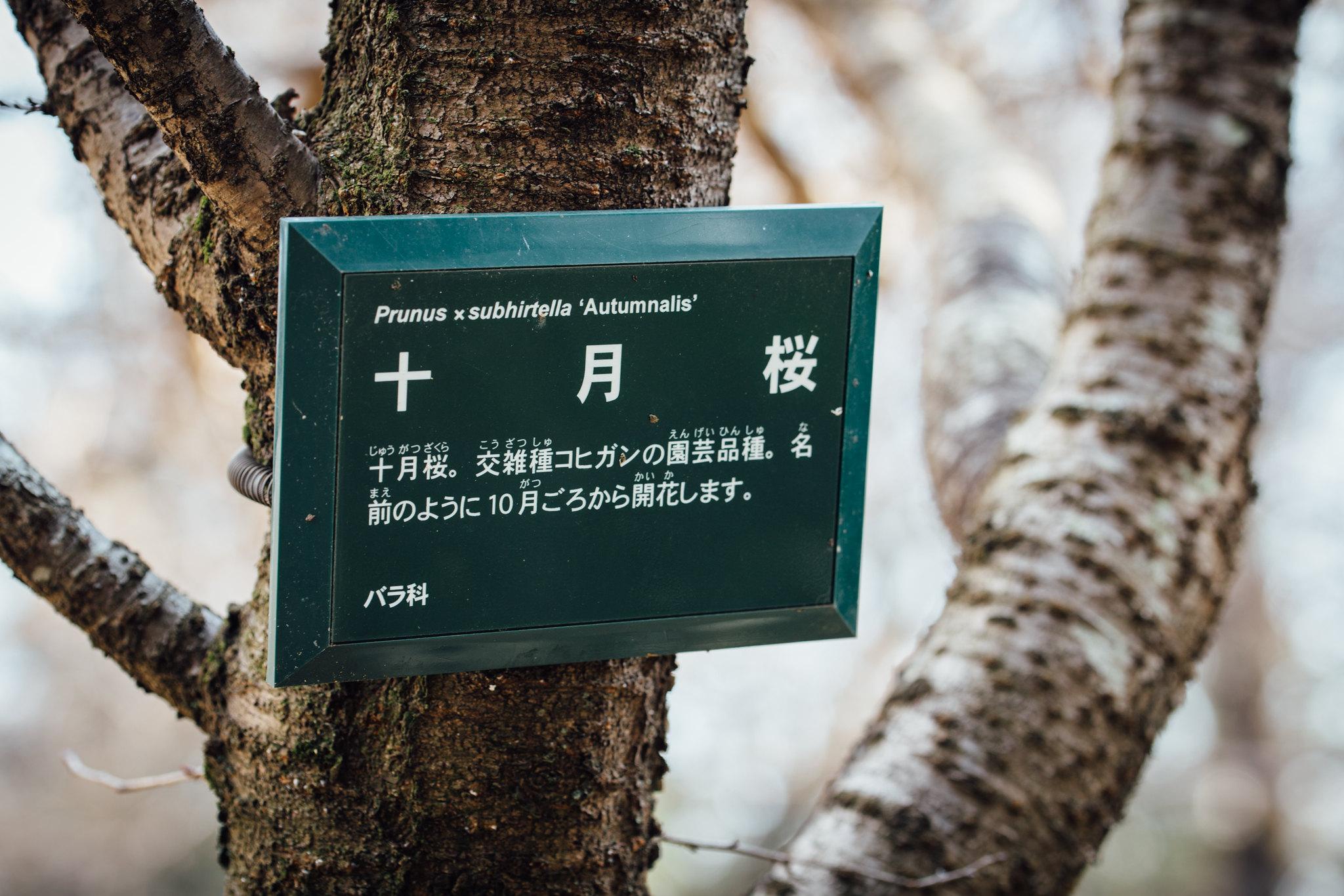 2016-02-28 武蔵野公園 001-4