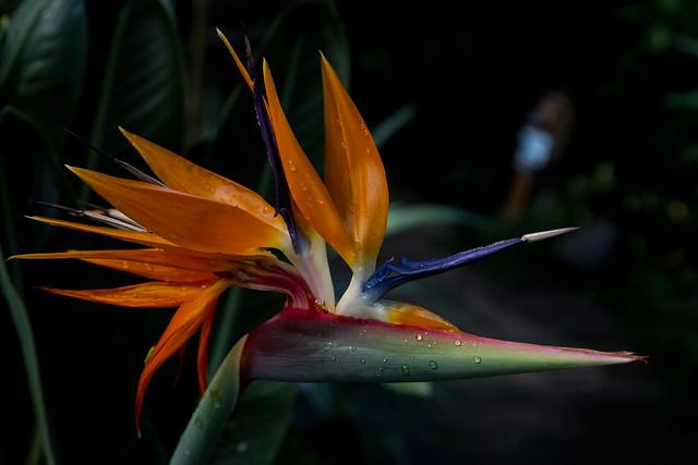 24769206372 021608d29b z Western Colorado Botanical Gardens