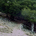 Ikaria's remotest hinterland 14 - entering the old oak forest