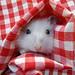 Cute Barbara by Dragan*