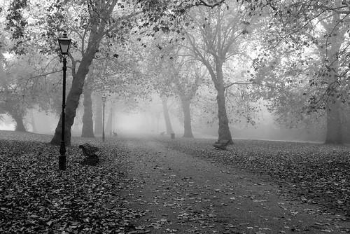 uk trees england mist london leaves fog europa europe nebel unitedkingdom path lamppost gb benches battersea bäume wandsworth weg pfad batterseapark