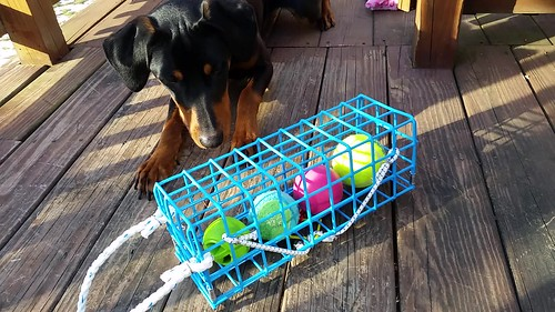 "Penny's favorite tennis balls have been ""trapped"" by The Wine Trap ©LapdogCreations"