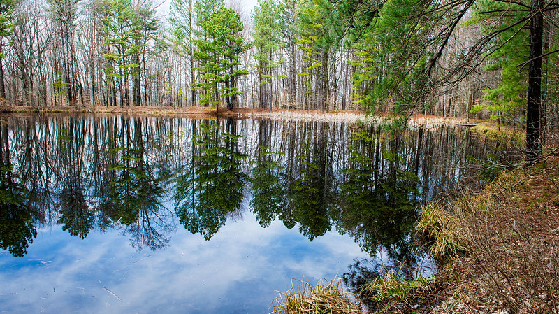 Hoosier National Forest - Charles C. Deam Wilderness - Terrill Ridge Trail - March 11, 2016