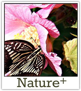 Nature + (the public group)