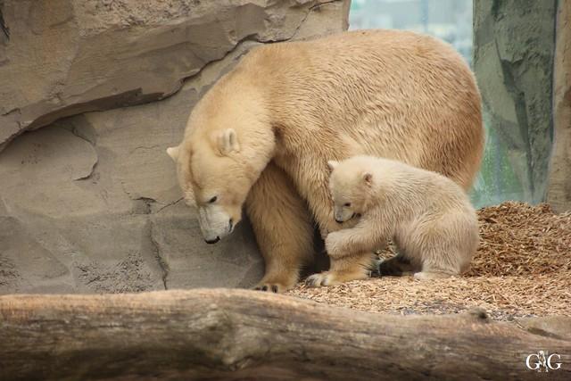 Zoo Bremerhaven 10.04.16 1.Teil22