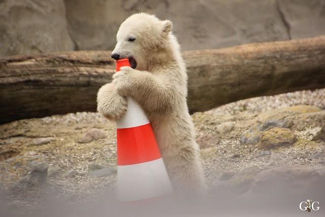 Zoo Bremerhaven 10.04.16 1.Teil9