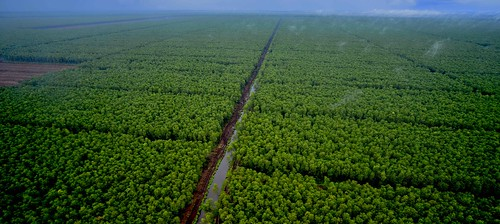 trees green forest paper sumatra indonesia forestry plantation paperpulp peopleandnature paperpulpplantation