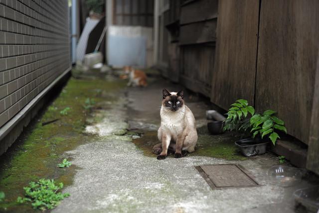野良Cat