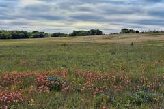 Meadowview Nature Area
