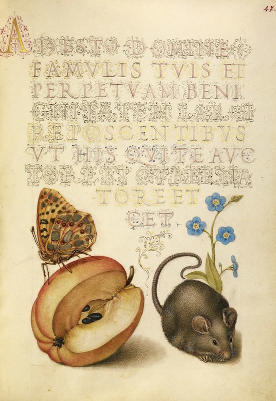 005- Fol 47- iluminado con ratón, manzana, mariposa y flor no me olvides- Mira Calligrafhiae monumenta- Joris Hoefnagel- Getty Museum.