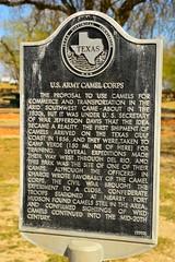 U.S. Camel Corps