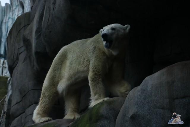 Tierpark Hagenbeck 02.01.2015   43