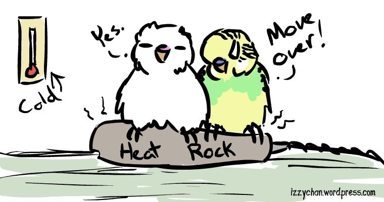 parakeets heat rock