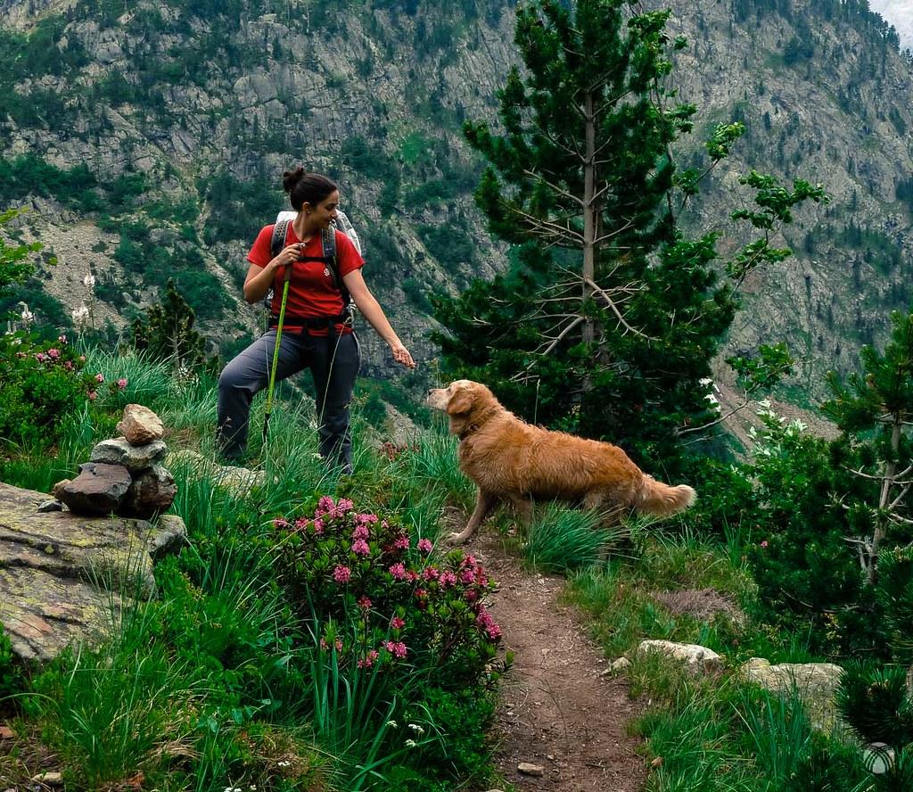 Azalea de montaña, Lourdes y Moss