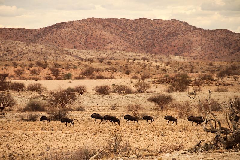 Namibia '15 #2 626