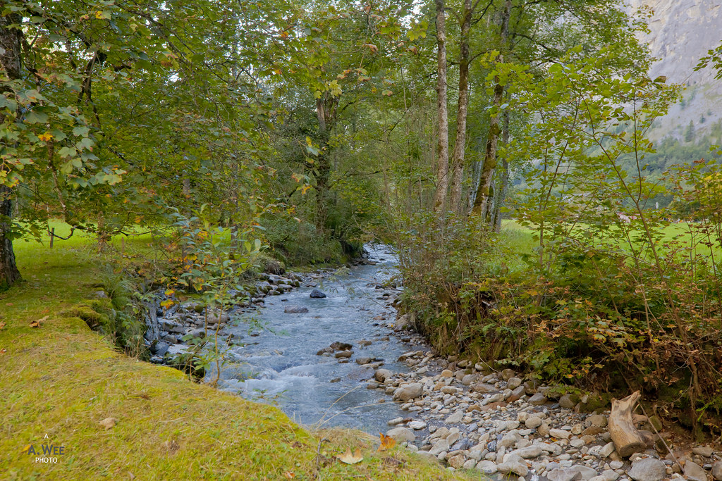 Stream with leaf litter