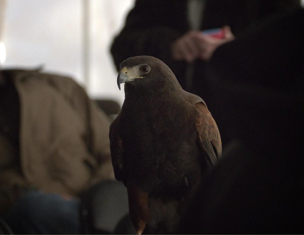 EagleFest 2016