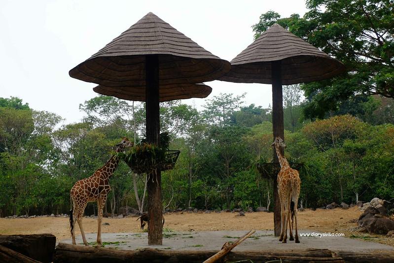 taman safari prigen 5