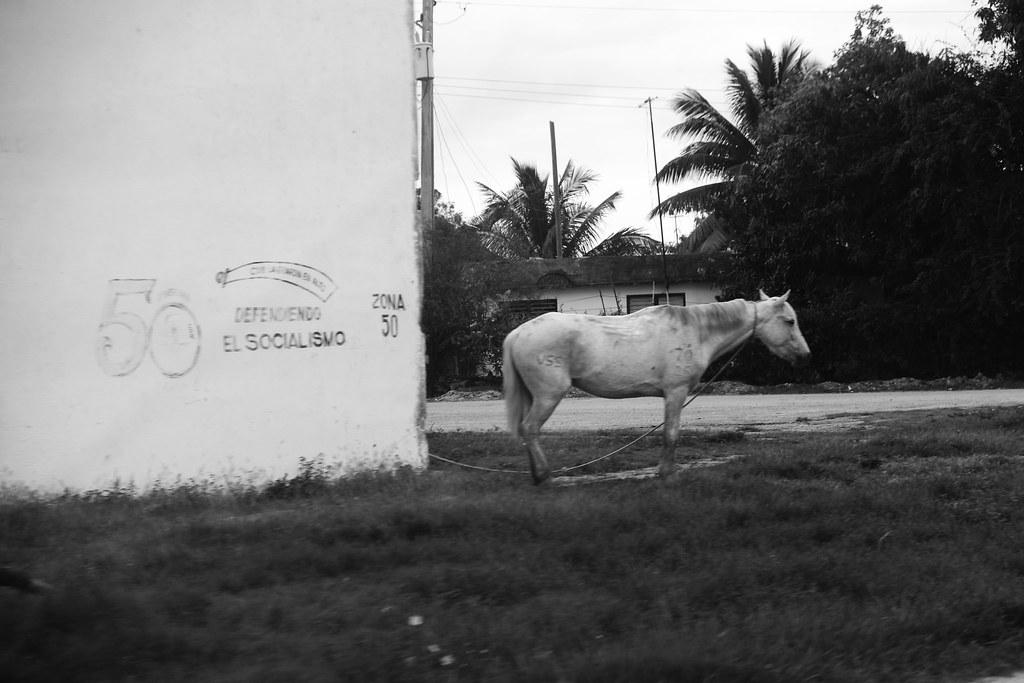 Ой, чий то кінь стоїть