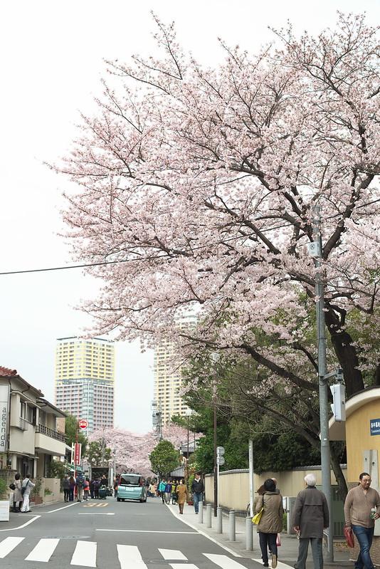 東京路地裏散歩 谷中霊園の桜 2016年4月2日