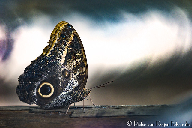 Psychedelic butterfly 1