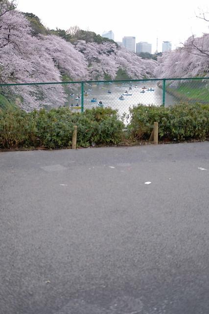 High key Keep out area Sakura viewing at Chidorigafuchi moat 14
