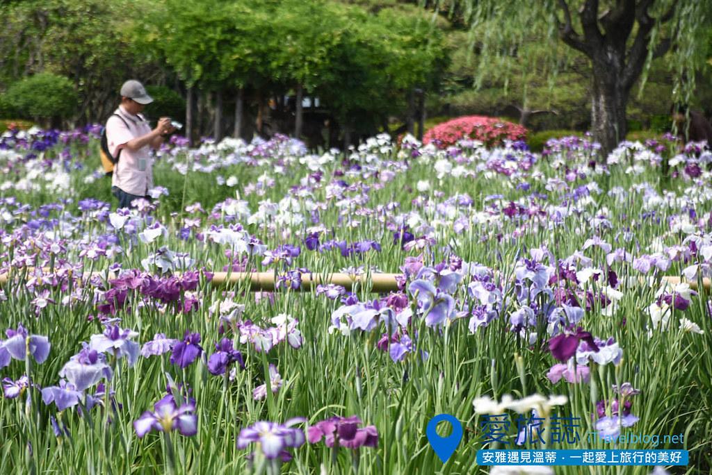 《东京景点推荐》堀切菖蒲园:无料赏花名所,沿途加映紫阳花盛开美景。