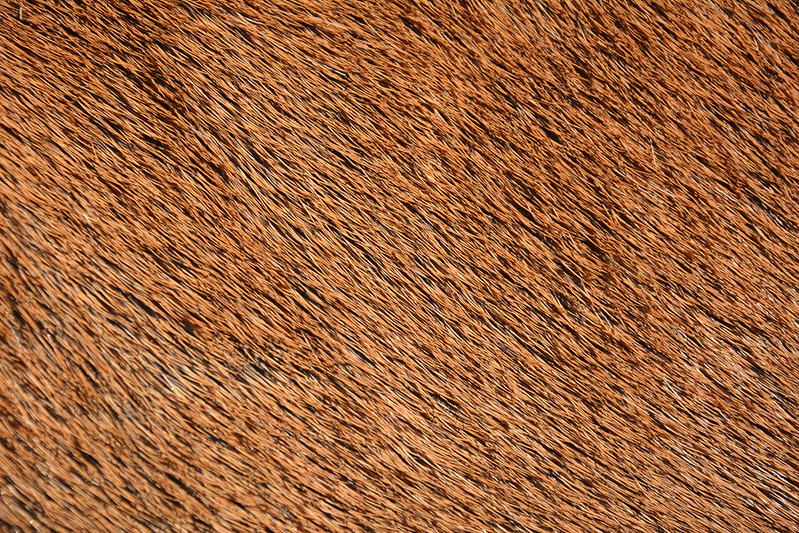animal-fur-closeup-texturepalace-2