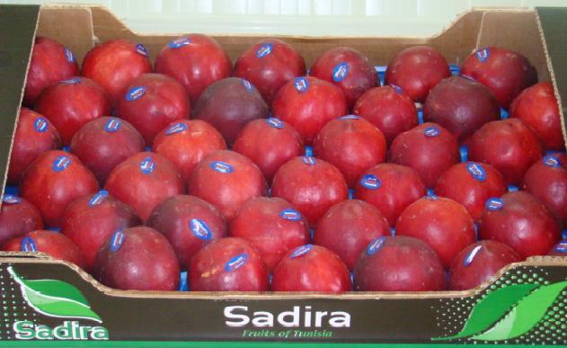 Fruits de la Tunisie (BY-ND-Sadira)