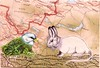 Arctic Ratbit and Common Toad Bunting