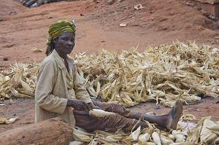 Smallholder Maize