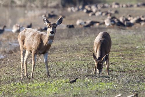 Wildlife in the Sacramento Valley