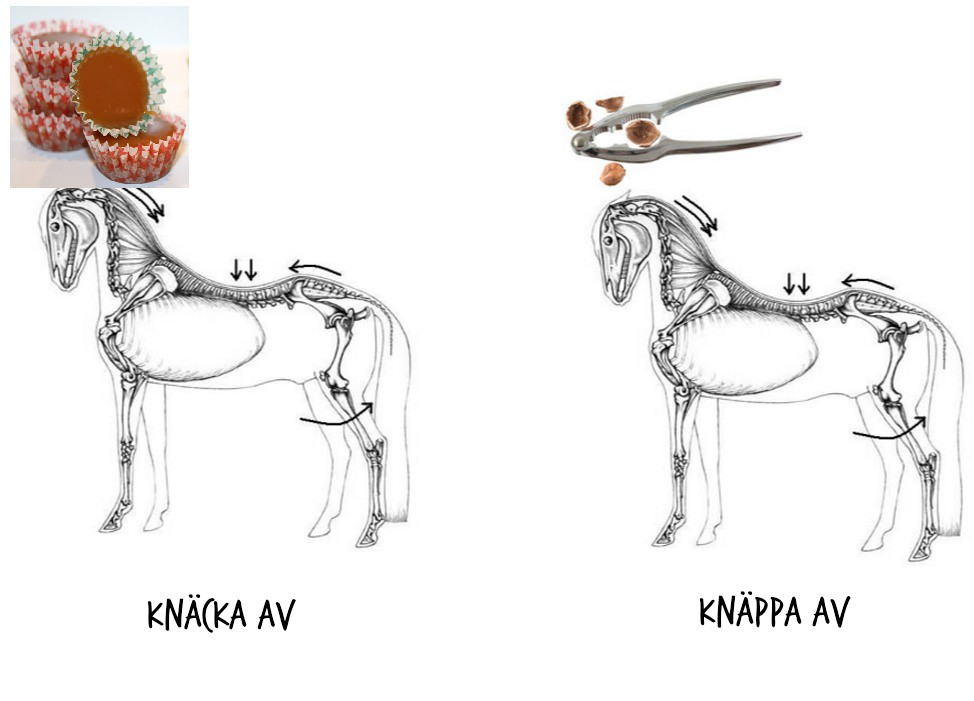 hästa
