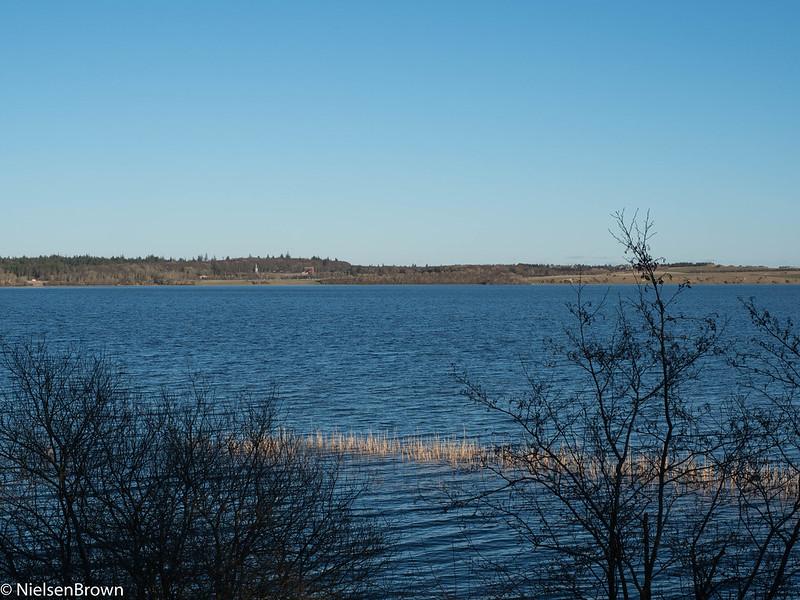 Vandet Sø Reeds