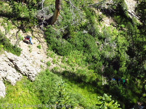 Scrambling up the Forest Route near Dundee Falls, Shoshone National Forest, Wyoming