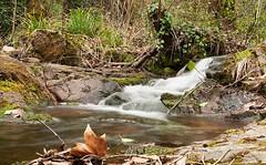 Parque Medioambiental de Gualba (Montseny)-2016
